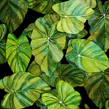 Katherine Blower, leafed (United Kingdom, Europe)