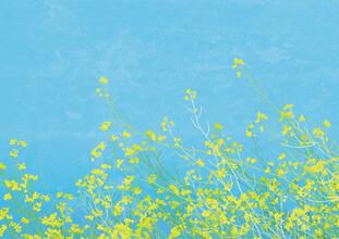 Katherine Blower, Yellow Flowers (Großbritannien, Europa)