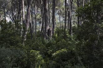 Theresa Breuer, Libanesischer Wald (Libanon, Asien)