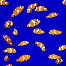 Katherine Blower, Clownfish (Großbritannien, Europa)