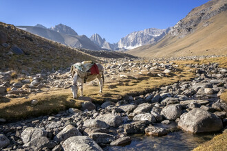 Theresa Breuer, Donkey in Bamiyan (Afghanistan, Asia)