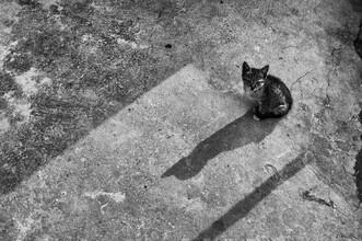 Michael Wagener, Lonely Cat (Armenien, Asien)