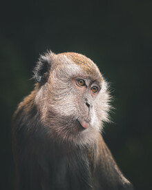 naughty monkey - fotokunst von Dimitri Luft