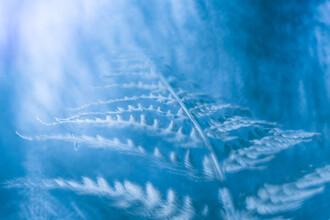 Sebastian Worm, Blue fern (Deutschland, Europa)