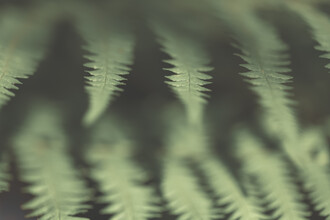 Sebastian Worm, Fern Close-up (Deutschland, Europa)
