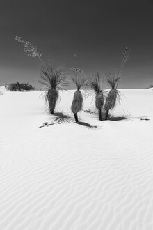 Melanie Viola, Dünen & Yucca, White Sands National Monument (Vereinigte Staaten, Nordamerika)