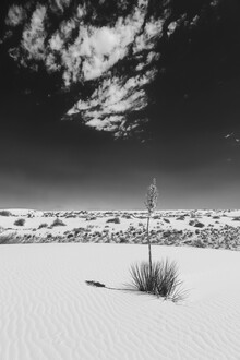 Melanie Viola, Yucca, White Sands National Monument (Vereinigte Staaten, Nordamerika)