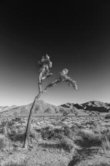 Melanie Viola, Joshua Tree | Monochrom (Vereinigte Staaten, Nordamerika)
