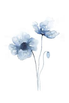 Cristina Chivu, Blue Poppies No. 2 (Großbritannien, Europa)