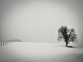 Bernd Grosseck, ein Baum und ein Zaun (Österreich, Europa)