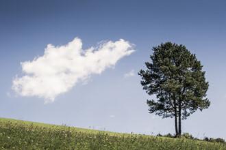 Bernd Grosseck, Eine Wolke und ein Baum (Österreich, Europa)