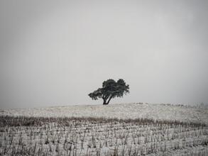Bernd Grosseck, einsamer Baum im Winter (Österreich, Europa)