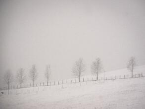 Bernd Grosseck, ein Schaf, sieben Bäume und Schneefall (Österreich, Europa)