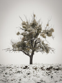 Bernd Grosseck, Mispelbaum im Schnee (Österreich, Europa)