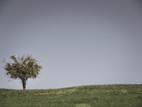 Bernd Grosseck, ein Baum in der Wiese (Österreich, Europa)
