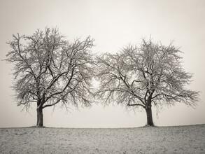 Bernd Grosseck, Zwei Winterbäume (Österreich, Europa)