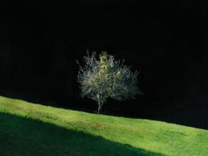 Bernd Grosseck, Baum im Nachmittagslicht (Österreich, Europa)