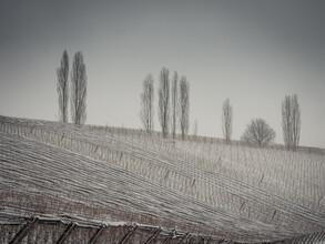 Bernd Grosseck, Winter im Weingarten (Österreich, Europa)