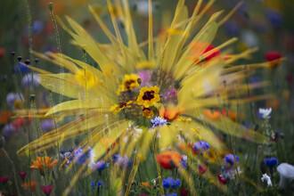 Nadja Jacke, Girl eye in summer flower meadow (Germany, Europe)