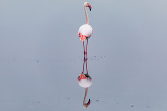 André Straub, Flamingo in the mirror (Namibia, Afrika)