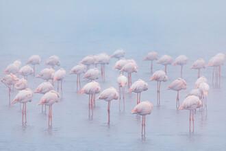 André Straub, Schlafende Flamingos (Namibia, Afrika)