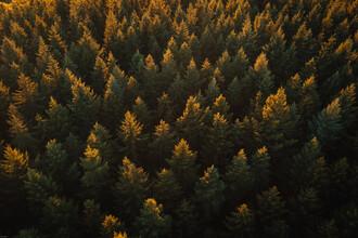 Lina Jakobi, Trees from above (Germany, Europe)