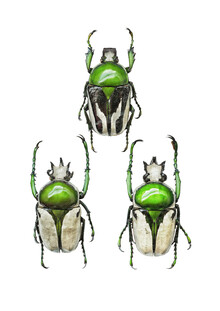 Marielle Leenders, Rarity Cabinet Insect Beetle Green 3 (Netherlands, Europe)