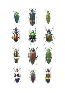 Marielle Leenders, Rarity Cabinet Insect Beetle Mix (Niederlande, Europa)