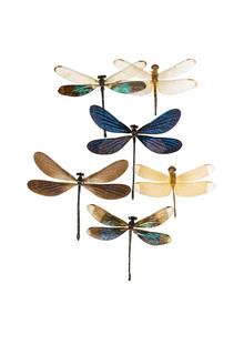 Marielle Leenders, Rarity Cabinet Insect Caterpillars (Niederlande, Europa)