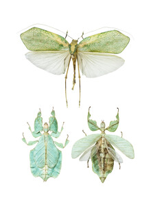 Marielle Leenders, Rarity Cabinet Insect 2 (Netherlands, Europe)