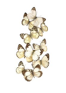 Marielle Leenders, Rarity Cabinet, Swarm of Butterflies (Netherlands, Europe)