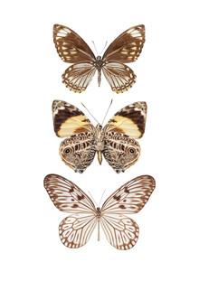 Marielle Leenders, Rarity Cabinet Butterflies, brown 3 (Niederlande, Europa)