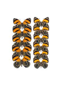 Marielle Leenders, Rarity Cabinet Butterfly Orange 2 (Netherlands, Europe)