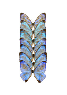 Marielle Leenders, Rarity Cabinet Butterfly Blue (Netherlands, Europe)