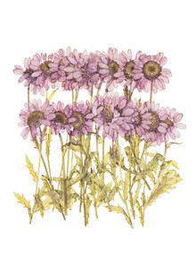 Marielle Leenders, Rarity Cabinet Flower Dried Flowers (Netherlands, Europe)
