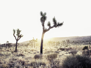 Vera Mladenovic, Joshua Tree (United States, North America)
