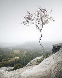 Ronny Behnert, Young Birch (Deutschland, Europa)