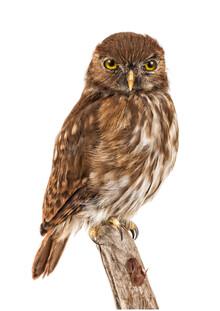 Marielle Leenders, Rarity Cabinet Bird Owl Small (Niederlande, Europa)