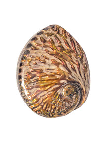 Marielle Leenders, Rarity Cabinet Shell Pink (Niederlande, Europa)