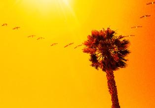 Aurica Voss, Into the Sun (Vereinigte Staaten, Nordamerika)