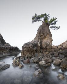 Ronny Behnert, Oita Tree Japan (Japan, Asien)
