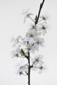 Studio Na.hili, White Blossoms (Deutschland, Europa)