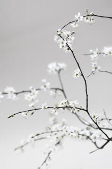 Studio Na.hili, Spring is in the Air (Deutschland, Europa)
