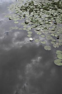 Studio Na.hili, Water Lily Heaven (Germany, Europe)