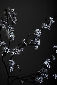 Studio Na.hili, Moody Flower Beauty (Deutschland, Europa)