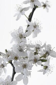 Studio Na.hili, Cherry Flower (Morocco, Africa)