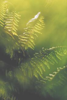 Sebastian Worm, Green colour (Norwegen, Europa)
