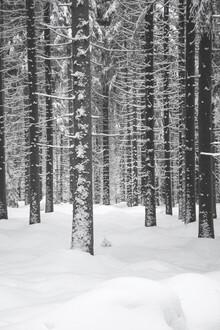 Studio Na.hili, Deep Dark White Forest (Czech Republic, Europe)