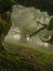 Anke Butawitsch, entrance to fairytale forest (Portugal, Europe)