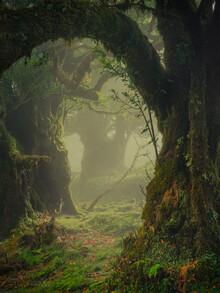 Anke Butawitsch, where fairies meet (Portugal, Europe)
